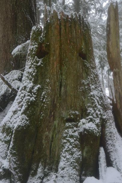 Big Cedar and Kennedy Falls Trail - I am Groot