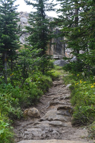 Iceline Trail via little yoho