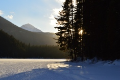 Beautiful shot of the dropping sun through the forest on the lake side